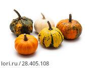 Купить «Colorful pumpkin and squash», фото № 28405108, снято 19 октября 2017 г. (c) Сурикова Ирина / Фотобанк Лори