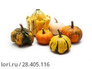 Купить «Colorful pumpkin and squash», фото № 28405116, снято 19 октября 2017 г. (c) Сурикова Ирина / Фотобанк Лори