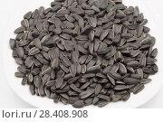 Sunflower black seeds. Стоковое фото, фотограф Александр Малышев / Фотобанк Лори