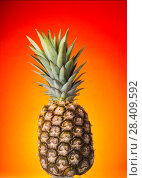 Купить «Fruit of pineapple with stem against bright background», фото № 28409592, снято 22 декабря 2017 г. (c) Сергей Молодиков / Фотобанк Лори