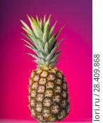Купить «Large pineapple with peel and green leaves on pink», фото № 28409868, снято 22 декабря 2017 г. (c) Сергей Молодиков / Фотобанк Лори