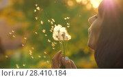 Купить «Girl Blow on a Dandelion», видеоролик № 28410184, снято 12 мая 2018 г. (c) Илья Шаматура / Фотобанк Лори