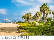 Купить «Paphos, Cyprus - July 20, 2017: Palm beach with empty sunbeds against Constantinou Bros Athena Beach Hotel. The hotel was fully refurbished in the winter of 10/11», фото № 28410812, снято 20 июля 2017 г. (c) Papoyan Irina / Фотобанк Лори