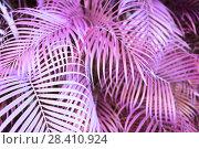 Купить «surreal pink palm tree leaves», фото № 28410924, снято 4 февраля 2014 г. (c) Syda Productions / Фотобанк Лори
