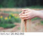 Купить «Sand through the fingers of the child pours», фото № 28442060, снято 15 ноября 2019 г. (c) Ирина Козорог / Фотобанк Лори