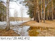 Купить «Россия, Сибирь. Весна, талая вода в лесу.», эксклюзивное фото № 28442412, снято 23 апреля 2018 г. (c) Александр Циликин / Фотобанк Лори