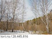 Купить «Россия, Сибирь. Весна, весенний лес», эксклюзивное фото № 28445816, снято 23 апреля 2018 г. (c) Александр Циликин / Фотобанк Лори