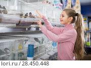 Купить «Girl visitor examining variants bird», фото № 28450448, снято 19 января 2017 г. (c) Яков Филимонов / Фотобанк Лори