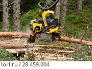 Купить «Timber harvesting machine felling and processing conifers, Inverness-shire, Scotland, August 2007», фото № 28459004, снято 22 сентября 2018 г. (c) Nature Picture Library / Фотобанк Лори