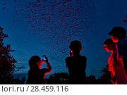 Купить «Tourists viewing Mexican free-tailed bats (Tadarida brasiliensis) leaving maternity colony at night to feed. This viewing is organized by Bat Conservation...», фото № 28459116, снято 25 мая 2018 г. (c) Nature Picture Library / Фотобанк Лори