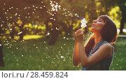 Купить «Womna Blow Dandelion at Sunset», видеоролик № 28459824, снято 12 мая 2018 г. (c) Илья Шаматура / Фотобанк Лори