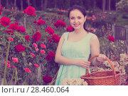 Купить «portrait of young female holding a basket near roses in outdoors», фото № 28460064, снято 18 апреля 2017 г. (c) Яков Филимонов / Фотобанк Лори