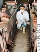 Купить «Veterinarian in pigsty», фото № 28460172, снято 21 октября 2018 г. (c) Яков Филимонов / Фотобанк Лори