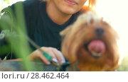 Купить «A girl is stroking a little dog, bright sunlight, summer day», видеоролик № 28462464, снято 23 июля 2018 г. (c) Константин Шишкин / Фотобанк Лори
