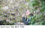 Купить «Girl in the bushes of cherry blossoms, petals fall off, slow- motion», видеоролик № 28467756, снято 14 декабря 2018 г. (c) Константин Шишкин / Фотобанк Лори
