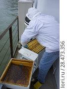 Купить «France, Paris (75), riverboat on La Seine rive, beehive killed by winter temperature.», фото № 28473356, снято 5 июля 2020 г. (c) age Fotostock / Фотобанк Лори