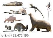 Купить «australia animals isolated», фото № 28476196, снято 15 октября 2018 г. (c) Яков Филимонов / Фотобанк Лори