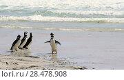 Купить «Magellanic Penguins on the beach», видеоролик № 28478908, снято 16 января 2018 г. (c) Vladimir / Фотобанк Лори