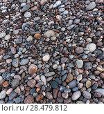 Купить «Pebbles on beach, Pleasant Bay, Cape Breton Island, Nova Scotia, Canada», фото № 28479812, снято 12 июня 2016 г. (c) Ingram Publishing / Фотобанк Лори