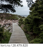 Купить «Boardwalk at coast, Ingonish, Cape Breton Island, Nova Scotia, Canada», фото № 28479820, снято 12 июня 2016 г. (c) Ingram Publishing / Фотобанк Лори