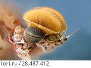 Купить «Mayfly (Epeorus albertae) close up of eye of male, Madison River, Montana, USA, August.», фото № 28487412, снято 21 августа 2018 г. (c) Nature Picture Library / Фотобанк Лори