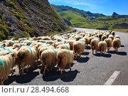 Купить «Sheeps walking on automobile road», фото № 28494668, снято 1 сентября 2013 г. (c) Ingram Publishing / Фотобанк Лори