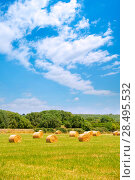 Hay round bale cereal plants in sunny day in menorca. Стоковое фото, фотограф Tono Balaguer / Ingram Publishing / Фотобанк Лори