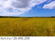 Menorca Ciutadella green grass meadows with red poppies at Balearic Islands. Стоковое фото, фотограф Tono Balaguer / Ingram Publishing / Фотобанк Лори