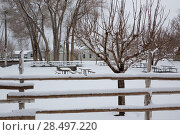 Nevada USA first snow at the park covering all in white (2013 год). Стоковое фото, фотограф Tono Balaguer / Ingram Publishing / Фотобанк Лори