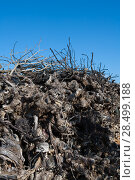 Купить «Dried vineyard firewood in Utiel Requena of Valencia Spain», фото № 28499188, снято 27 февраля 2006 г. (c) Ingram Publishing / Фотобанк Лори