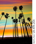 Купить «California sunset Palm tree rows in Santa Barbara US», фото № 28499264, снято 23 апреля 2013 г. (c) Ingram Publishing / Фотобанк Лори