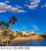 Benidorm Alicante playa del Mal Pas beach at sunset in Spain with palm trees (2014 год). Стоковое фото, фотограф Tono Balaguer / Ingram Publishing / Фотобанк Лори