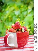 Купить «Ripe organic strawberries in a bowl», фото № 28500232, снято 1 июня 2013 г. (c) Ingram Publishing / Фотобанк Лори
