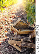Купить «Crates ready for grape harvesting», фото № 28500772, снято 22 апреля 2019 г. (c) Ingram Publishing / Фотобанк Лори