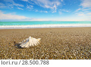 Купить «Shell on beach with tide at background», фото № 28500788, снято 19 октября 2011 г. (c) Ingram Publishing / Фотобанк Лори