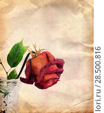 Купить «Vintage background with dried red rose in vase», фото № 28500816, снято 27 мая 2019 г. (c) Ingram Publishing / Фотобанк Лори