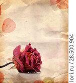 Купить «Vintage background with dried red rose and leaves», фото № 28500904, снято 27 мая 2019 г. (c) Ingram Publishing / Фотобанк Лори
