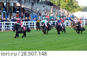 Купить «Pictured this afternoon - 17/10/16 Forget about the Grand National – the biggest horse-racing event on the calendar in Sussex starred junior jockeys racing...», фото № 28507148, снято 17 октября 2016 г. (c) age Fotostock / Фотобанк Лори