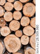Купить «Фон из спилов деревянных чурок. Сложенные березовые дрова», фото № 28509980, снято 1 июня 2018 г. (c) Наталья Осипова / Фотобанк Лори