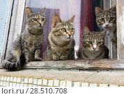 Группа серых котов на подоконнике. Стоковое фото, фотограф Вячеслав Палес / Фотобанк Лори