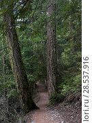 Купить «Dirt road passing through forest, Pemberton, Whistler, British Columbia, Canada», фото № 28537916, снято 22 марта 2016 г. (c) Ingram Publishing / Фотобанк Лори