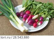 Купить «Свежий редис и зеленый лук на тарелке», фото № 28543880, снято 4 июня 2018 г. (c) Елена Коромыслова / Фотобанк Лори