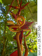 Купить «Speckled tree snake (Imantodes inornatus) on a Heliconia flower, La Selva Biological Station, Costa Rica.», фото № 28547560, снято 17 августа 2018 г. (c) Nature Picture Library / Фотобанк Лори