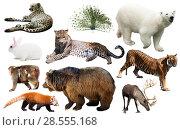 Купить «asia animals isolated», фото № 28555168, снято 20 марта 2019 г. (c) Яков Филимонов / Фотобанк Лори