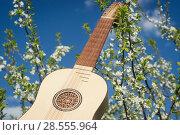 Купить «Vihuela de mano of the 16th century», фото № 28555964, снято 12 мая 2018 г. (c) Дмитрий Черевко / Фотобанк Лори