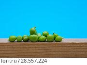 Купить «Зелёный горошек крупным планом на деревянной доске», фото № 28557224, снято 4 июня 2018 г. (c) V.Ivantsov / Фотобанк Лори