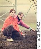 Купить «women sows in bed at hothouse», фото № 28567620, снято 1 мая 2010 г. (c) Яков Филимонов / Фотобанк Лори