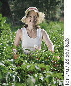 Купить «woman in plant of potato», фото № 28567628, снято 26 июня 2010 г. (c) Яков Филимонов / Фотобанк Лори