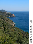 Купить «Overview of Cape Lygaria with three old windmills on the coast of Arcadia, near Tyros, Peloponnese, Greece, August 2017.», фото № 28575108, снято 20 мая 2019 г. (c) Nature Picture Library / Фотобанк Лори