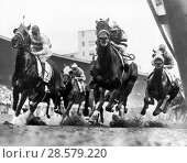 Купить «New York, New York: October 22, 1956 Ritzy in the center foregrround with jockey Ismael Valenzuela up is out front at the clubhouse turn at the Jamaica...», фото № 28579220, снято 23 июля 2018 г. (c) age Fotostock / Фотобанк Лори